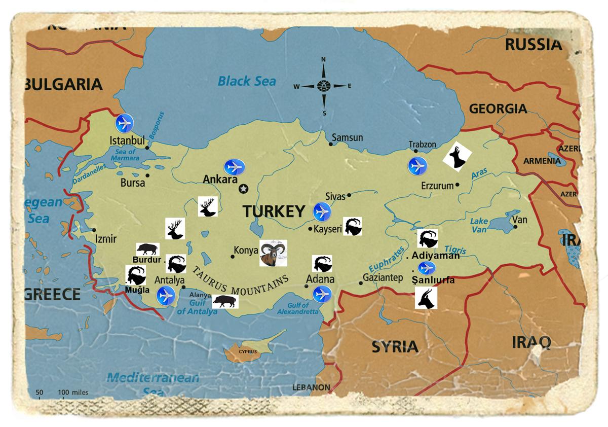 Turkey Safari Season
